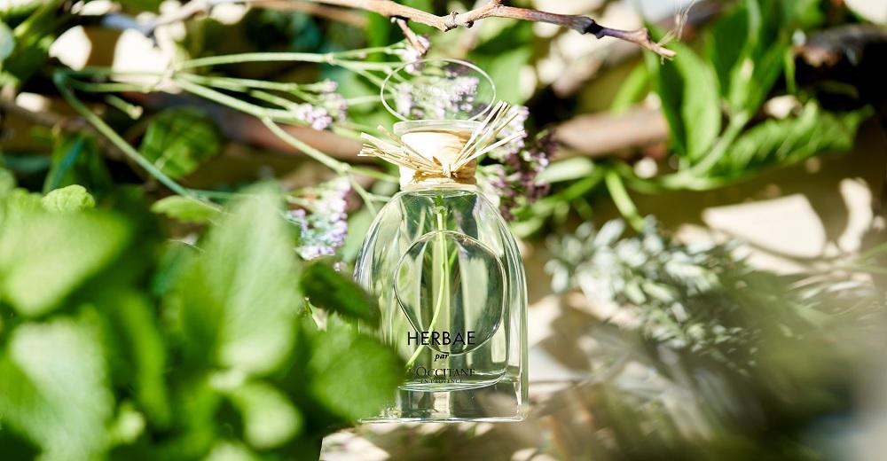 herbae l occitane